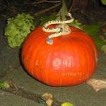 Kürbisse schnitzen an Halloween