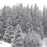 Weihnachtsbaum kaufen: Qualität statt Nepp