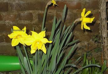 Laßt den Frühling in die Wohnung!