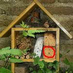 Die ersten Bewohner im Insektenhotel
