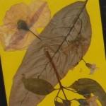 Mit Blättern basteln im Herbst